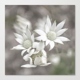 Flannel Flowers Canvas Print