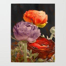 Vintage Ranunculus Poster
