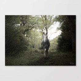 The Pony Canvas Print