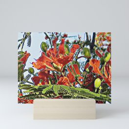 Tropical Royal Poinciana Tree Full Bloom Mini Art Print
