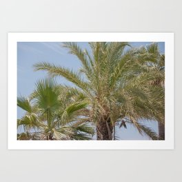 Summer vibes with the palm trees Art Print