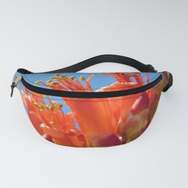 Octotillo Blossoms by Reay of Light Photography Fanny Pack