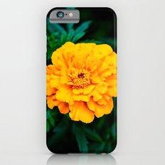 Tangerine Beauty Slim Case iPhone 6s