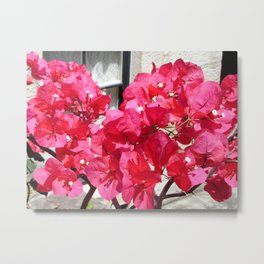 Hot Pink Bougainvillea Metal Print