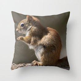 Red Squirrel enjoying the sun Throw Pillow