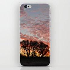 Morning Glory iPhone & iPod Skin