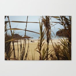 The Lure of a Tan Canvas Print