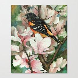 Baltimore Oriole and Magnolias Canvas Print