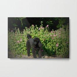 Black Poodle in the Garden Metal Print