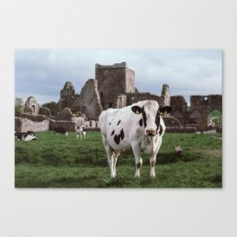 Cows of the Castle - Ireland Canvas Print