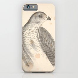 Vintage Print - Companion to Gould's Birds of Australia (1877) - New Holland Goshawk iPhone Case