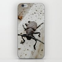 beetle iPhone & iPod Skins featuring Beetle by Bor Cvetko