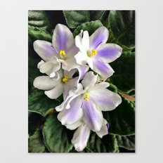 Violets symbolize Love Canvas Print