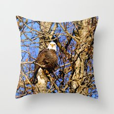 Bald Eagle (9279) Throw Pillow