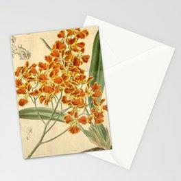 Flower 3705 oncidium forbesii Mr Forbes Oncidium1 Stationery Cards