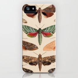 Vintage Natural History Moths iPhone Case