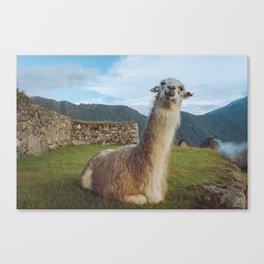 No Prob-llama - Art Print Canvas Print