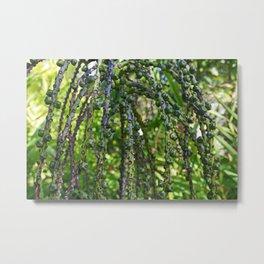 Sugar Palm- horizontal Metal Print