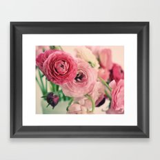 Ranunculus in Pink Framed Art Print