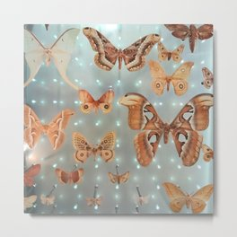 Moths Display Metal Print