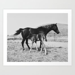 Horse and Her Foal Art Print