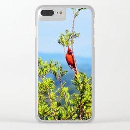 Cardinal in Portland, Maine Clear iPhone Case