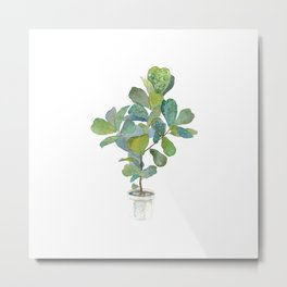 Fiddle Leaf Fig Tree Metal Print