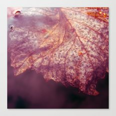 water leaf Canvas Print