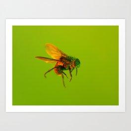 Bugged #11 Art Print