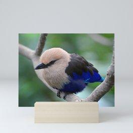 Blue Bellied Roller Mini Art Print