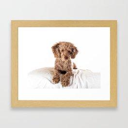 Kenzie the poodle Framed Art Print
