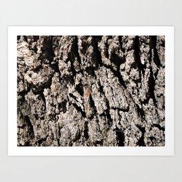 TEXTURES: Englemann Oak Bark Art Print