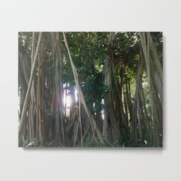 Banyan Trees II - Sarasota, FL Metal Print