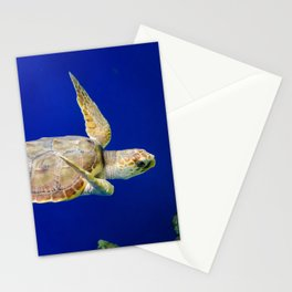 Sea Turtle 1 Marine Animal / Underwater Wildlife Photograph Stationery Cards