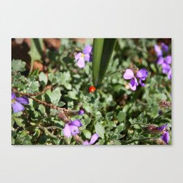 Ladybug in spring Canvas Print