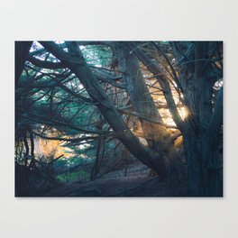 Sunset in the Trees Canvas Print