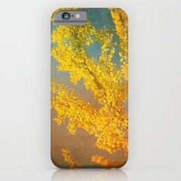 Yellow Ginkgo Tree in Autumn iPhone Case