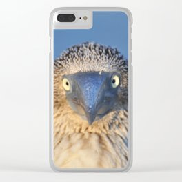 Blue footed booby Clear iPhone Case
