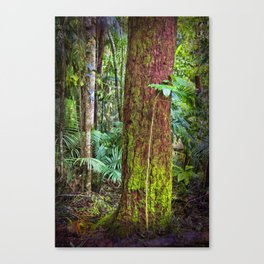 New and old rainforest growth Canvas Print