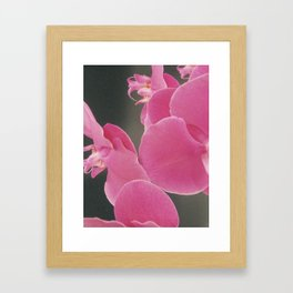 Abstract Orchids Framed Art Print