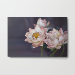 Lovely Water Lily II Metal Print