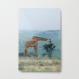 Ngorongoro Crater, Tanzania V Metal Print
