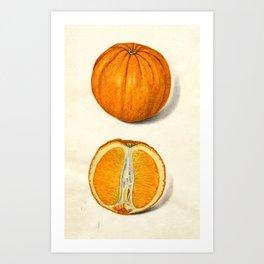 Vintage Sliced Orange Illustration Art Print