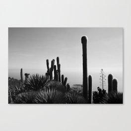 Cactuses Canvas Print