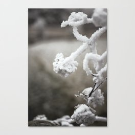 Frosted Flowers Canvas Print