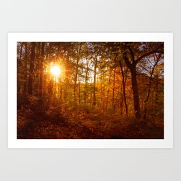 Autumn Sunset in the Forest Rural / Rustic Landscape Photograph Art Print