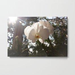 Sunlit Orchid Metal Print