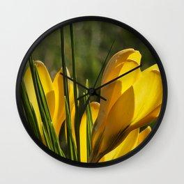 Golden orange crocuses in spring Wall Clock