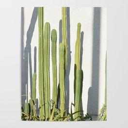 cali cacti Poster