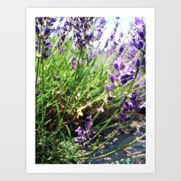 Lavender Bumble Bee Art Print
